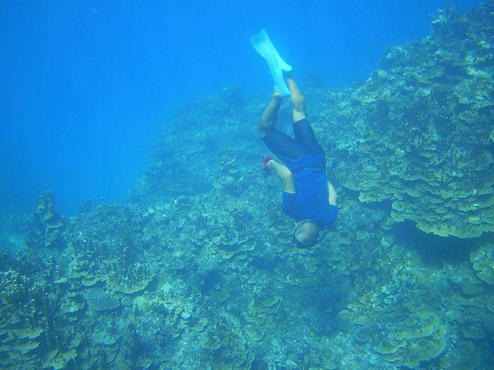 パラオハマサンゴで素潜りドボン