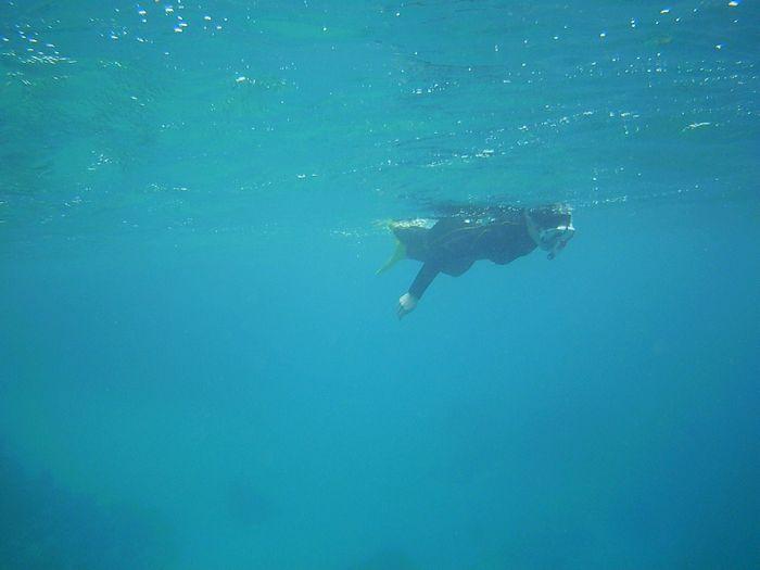 もくもくと水中世界に没頭です