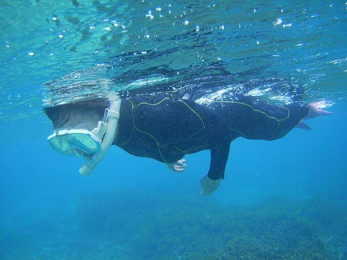 しゃべりながら泳ぎ続けています