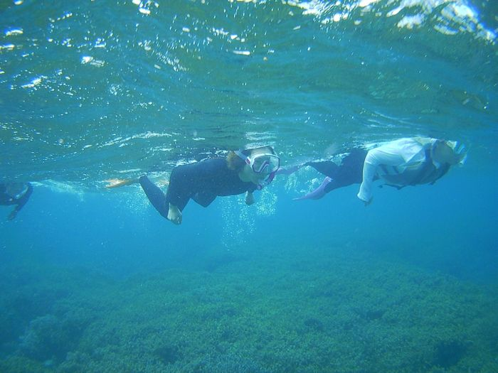 女子チーム、とっても活発な泳ぎです