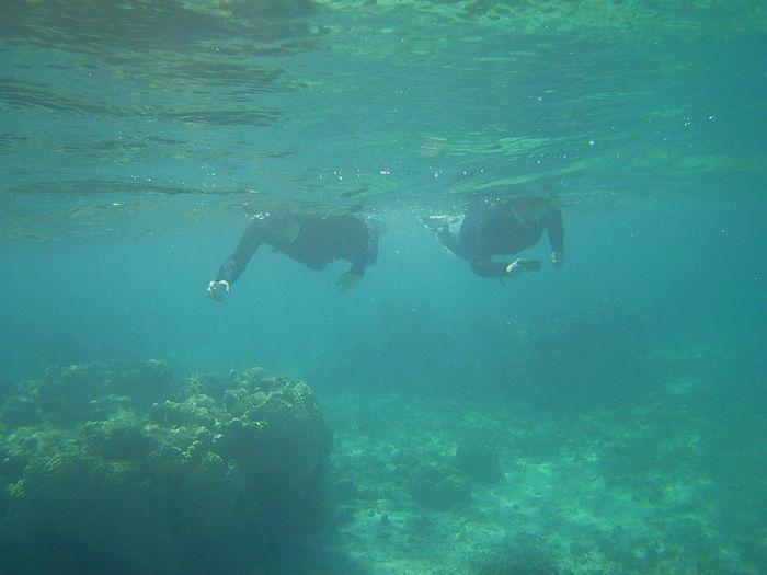 水中世界に没頭です