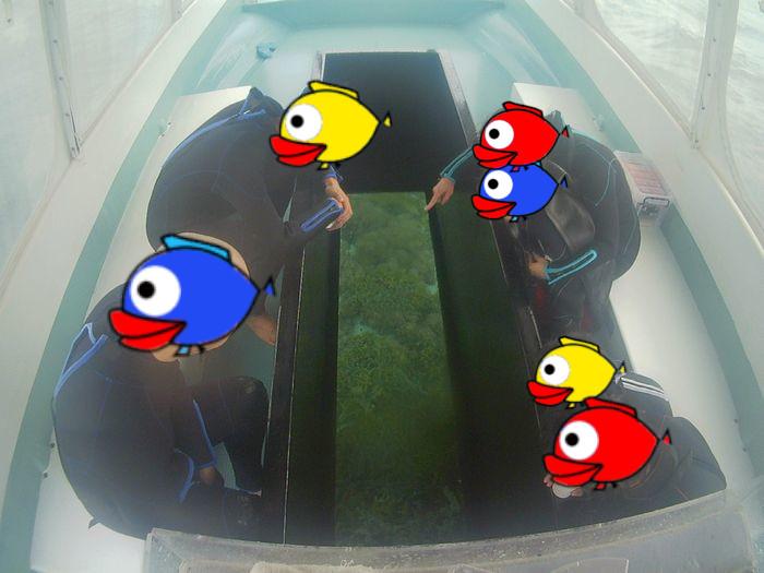 最後はグラスボートで水中観察です