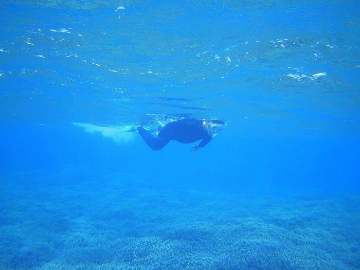 パワフルに泳ぎ回っています。
