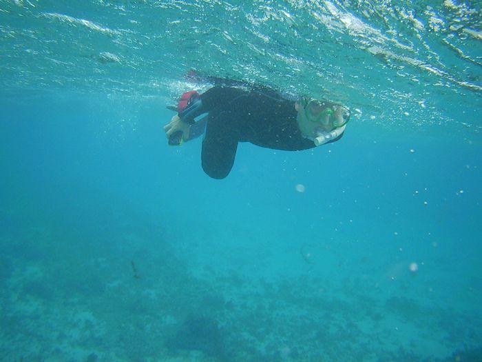 波、流れに負けず、泳いでいます