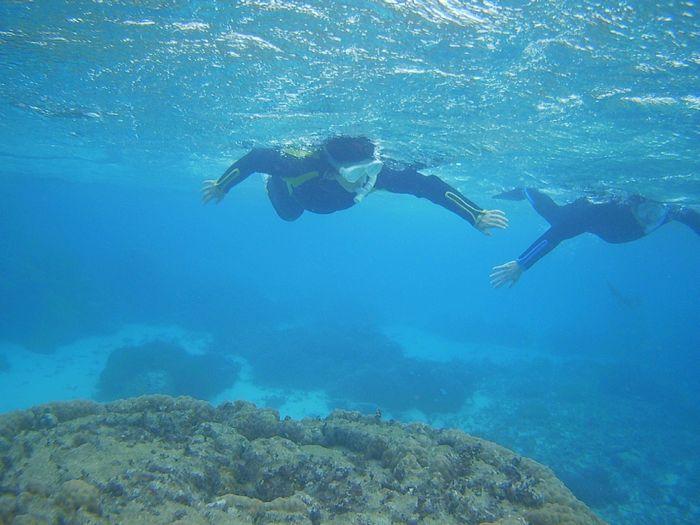 後半は自由に泳ぎ回って頂きました