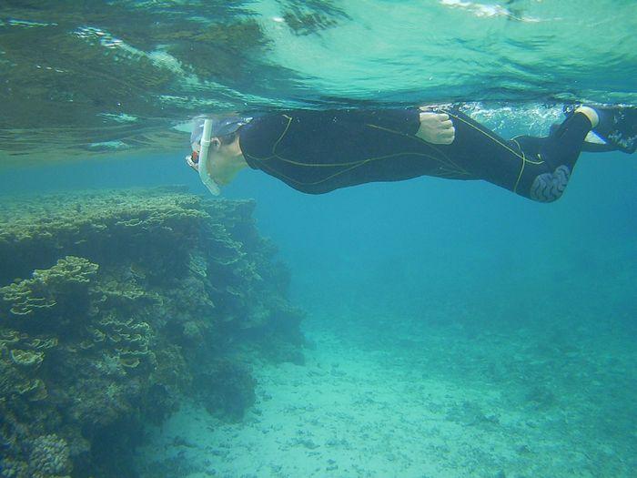 サンゴに感動!