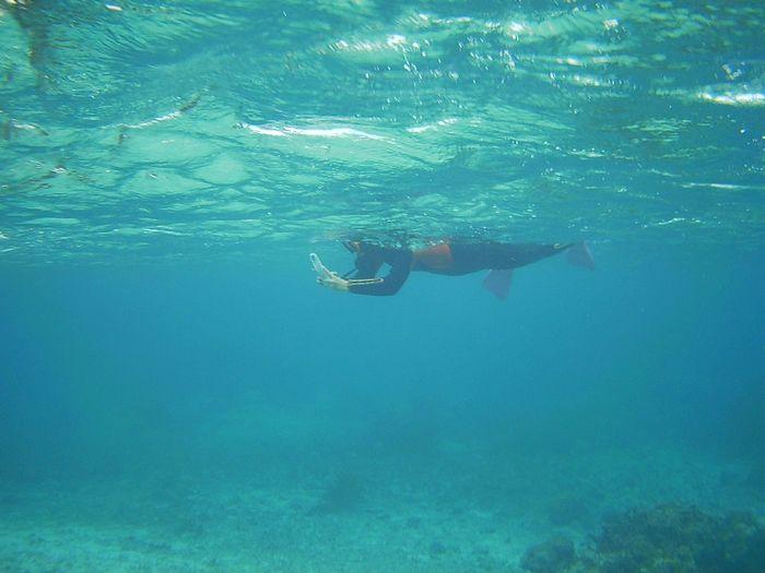 撮影しながら泳いでいます。