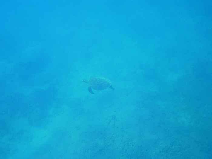 あっちでも泳いでいますね