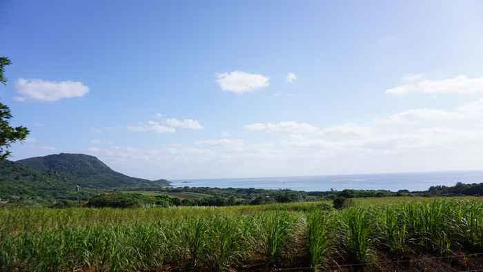 1月、天気は快晴の石垣島