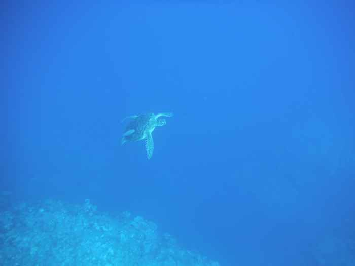 さんご礁の海からのカメポイント