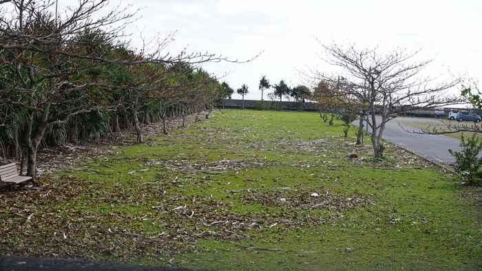 作業前の港、芝生スペース