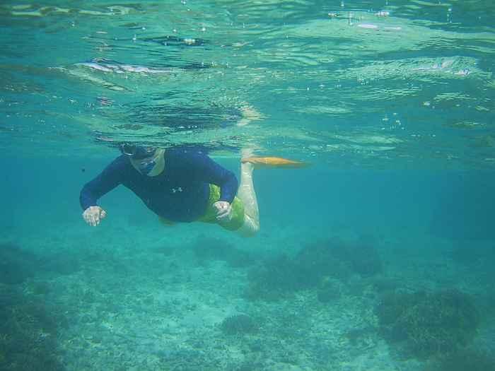 お父さん、パワフルに泳いでいます。