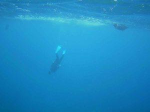 石垣島旅行、初日はシュノーケリング!いつものパターンです♪
