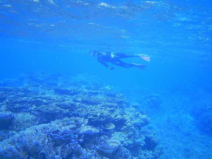 マイタケサンゴポイント、透明度抜群です