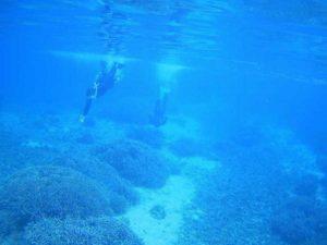 凪の石垣島、シュノーケリング日和です。