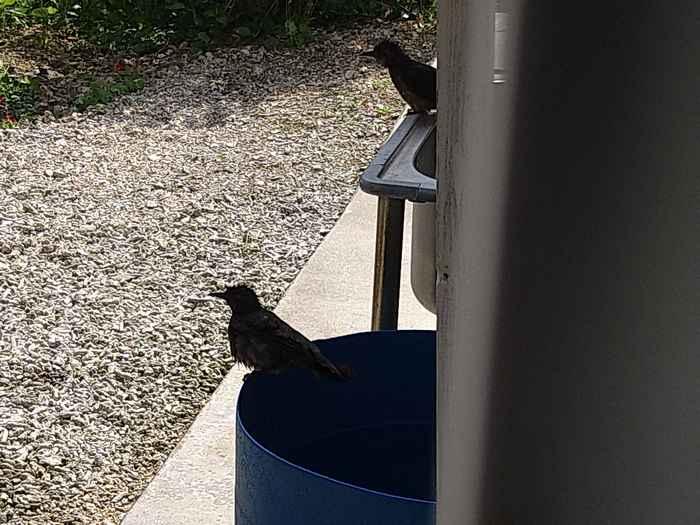 鳥さんが水浴び
