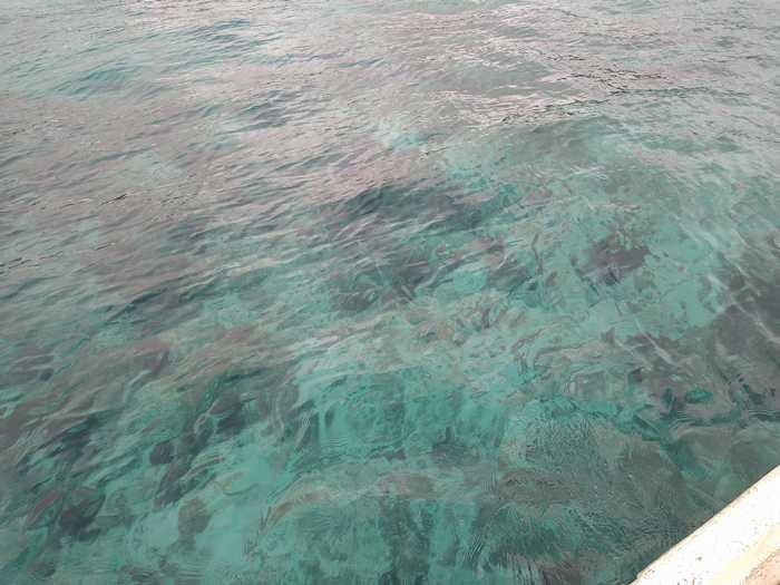 海の透明度は抜群です