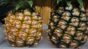 パイナップルの食べごろの見極め方ブログ
