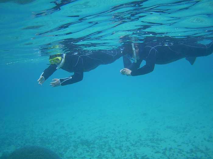 すーいすい泳ぐお父さんとお母さん