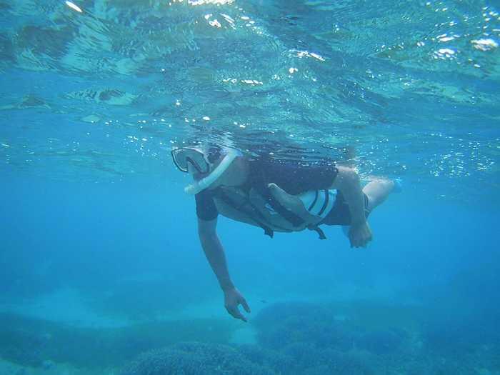 軽やかに泳ぎ回っています。