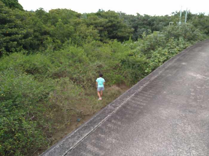 堤防沿いに寄り道です