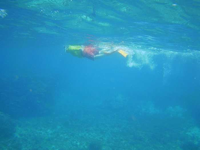 フリータイムでは自由に泳ぎ回っていました