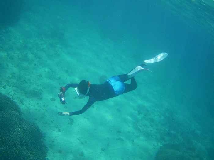 ドボンと素潜り軽快な泳ぎです