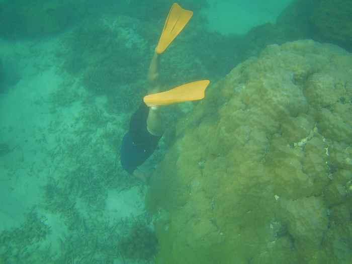 ハマサンゴの下の隙間に