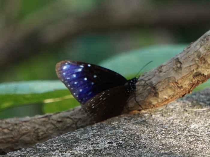 ほんのり青紫