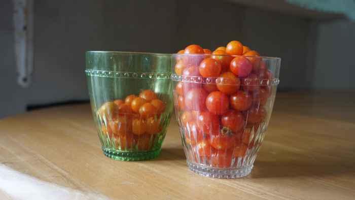庭のトマト収穫祭