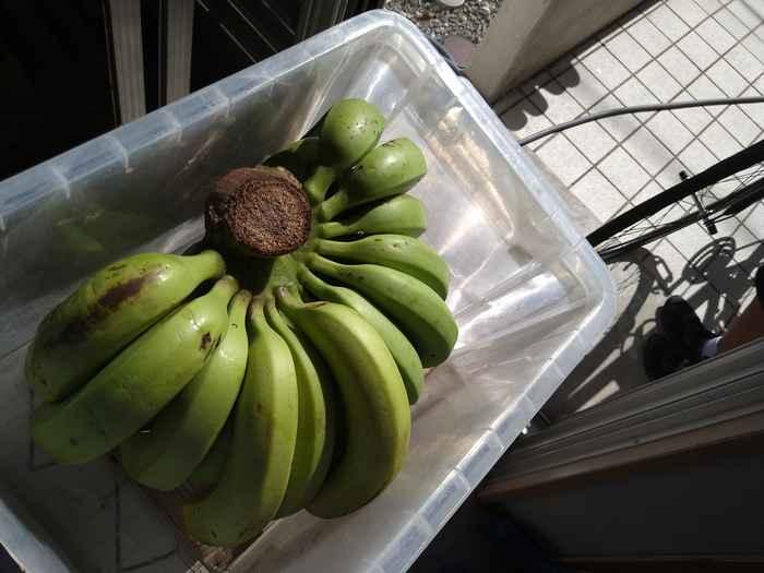 バナナ、いっぱいです♪