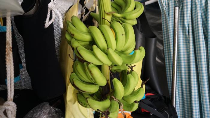 屋内保管のバナナ