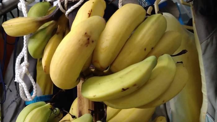 台風バナナ、無事に黄色になりました。