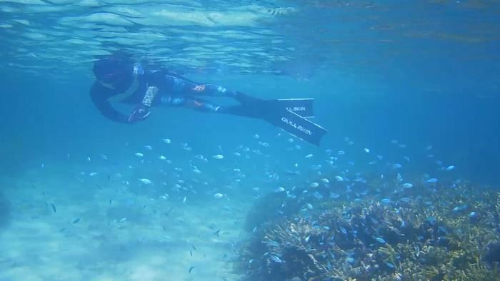 サンゴとお魚さんはすぐ近く♪