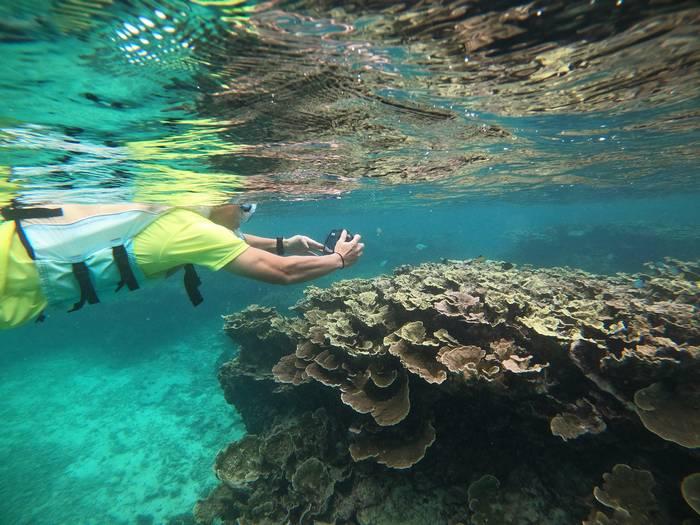 サンゴの上を群れるお魚さん
