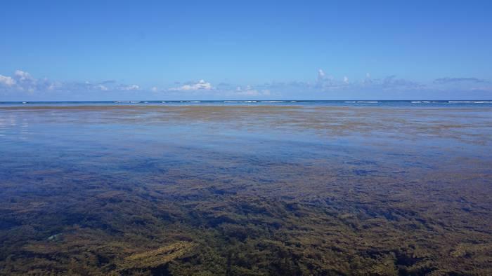 海藻がいっぱい!