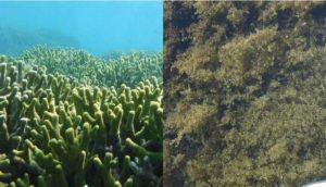 サンゴと海藻。それぞれの役割。