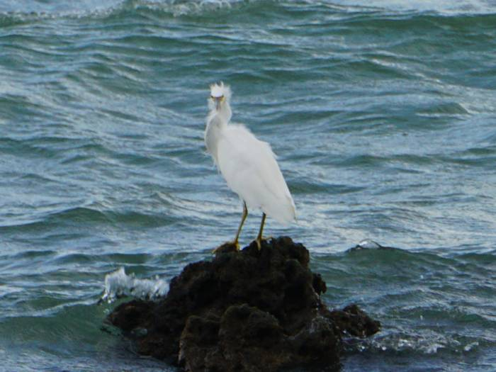 岩で目が合う鳥さん
