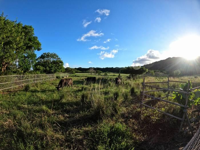 晴れた日と牧草地