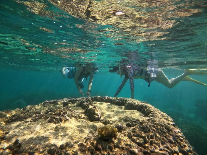 サンゴを観察されています