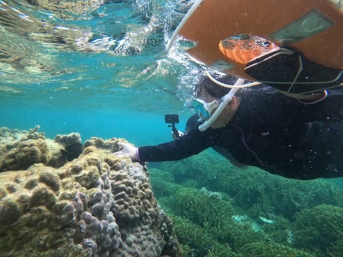 ハマサンゴの上のお魚さんと戯れる