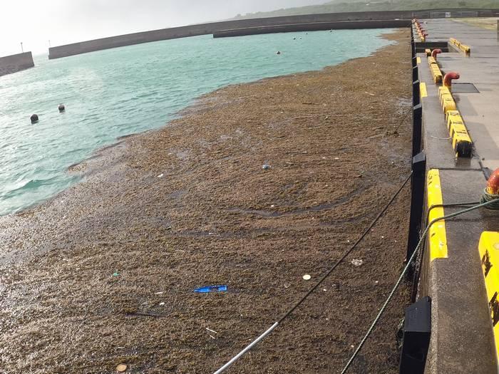 港には海藻がいっぱい。