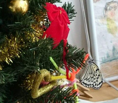 クリスマスツリーにオオゴマダラ