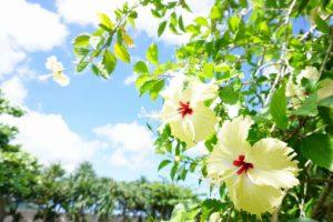 2017年8月の石垣島の天気、気温、服装、旅行、観光、アクティビティのプチブログ
