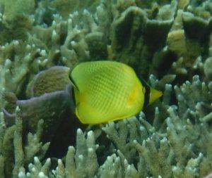 その他きれいなお魚さん編 石垣島東海岸、シュノーケルツアーで見れる魚たち♪