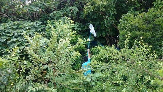 庭で蝉取り
