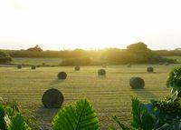朝日と牧草ロール