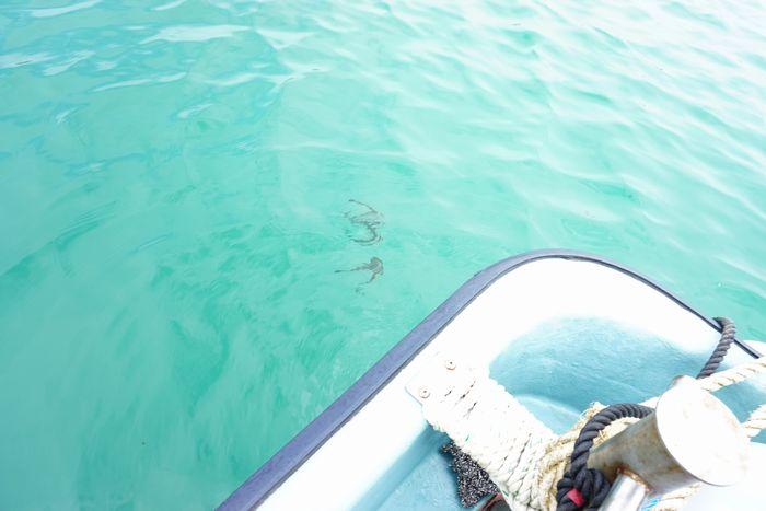 ボート上から見てみると