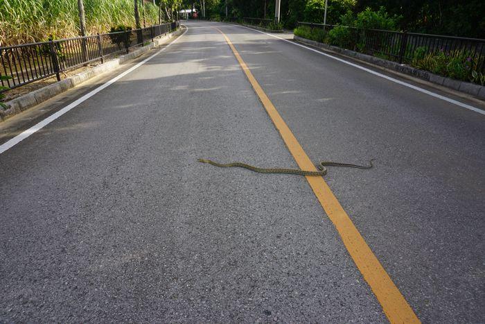 道路に動く物体