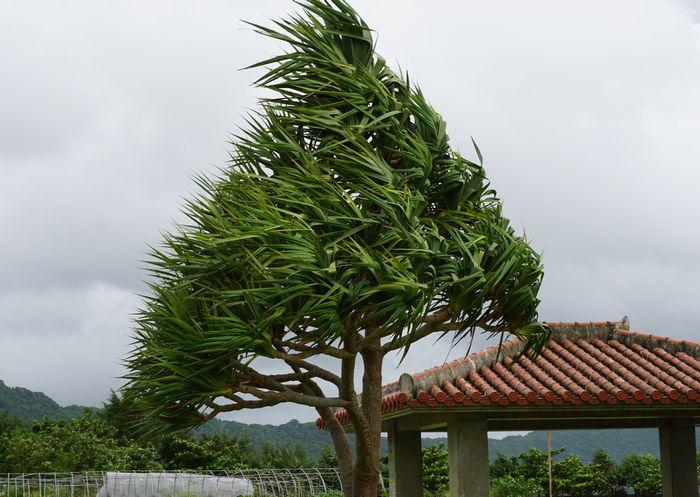 台風前、風が強くなってきました。